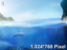 Ecco the Dolphin Wallpaper 1.024x768px